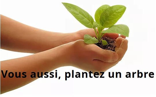 Plantez un arbre.JPG