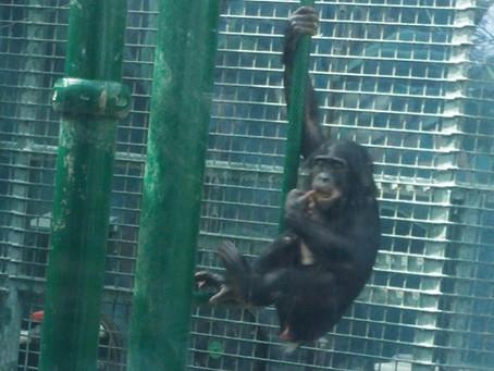 Last Trip to the Columbus Zoo