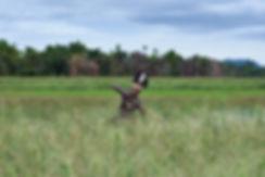 Arare-Project-032.jpg