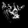 A-A_Bulls_Head-removebg-preview.png