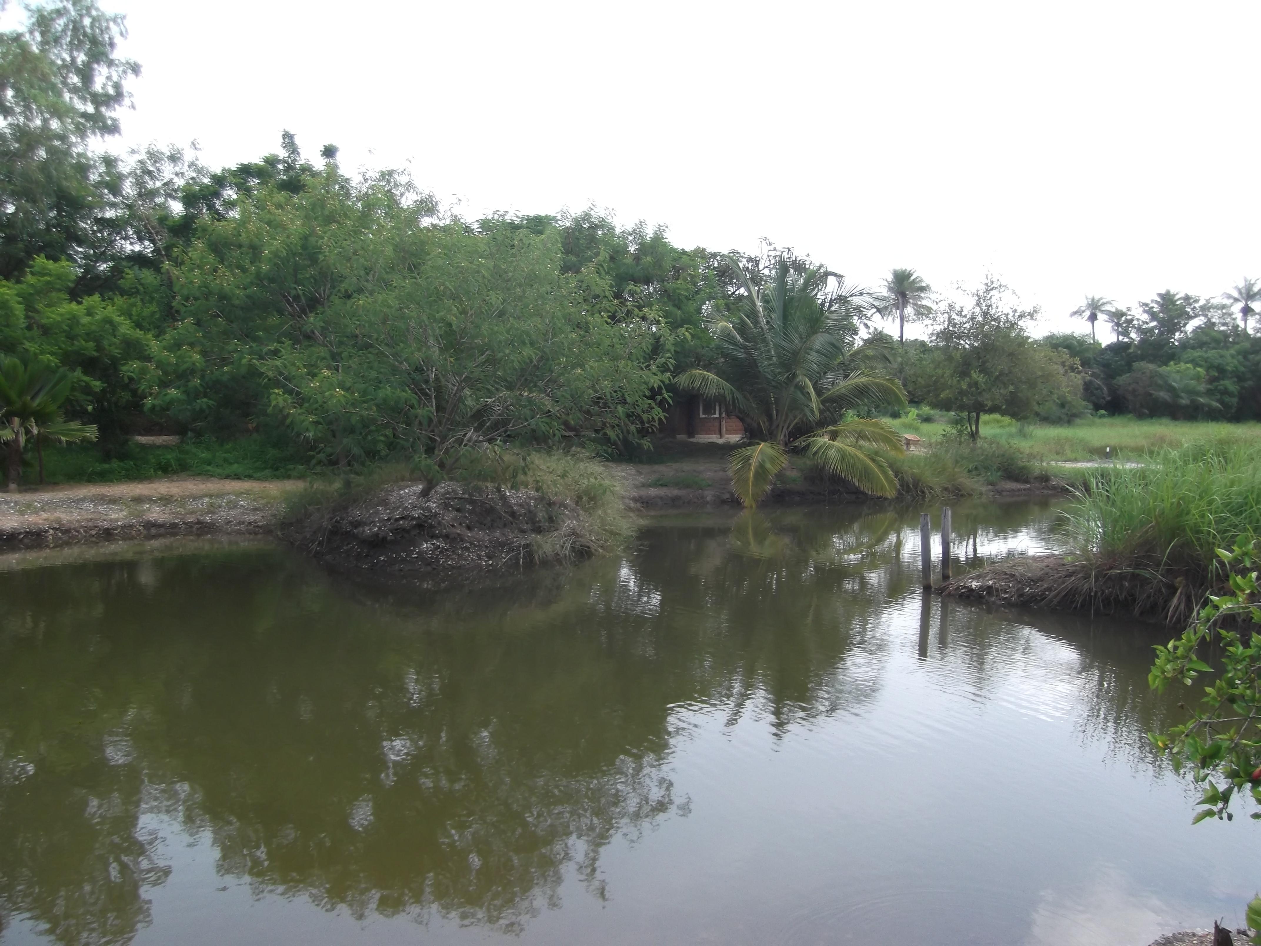 Breeding fish pond