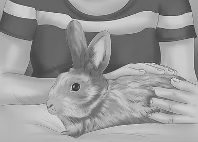 Image - Rabbit Care.jpg