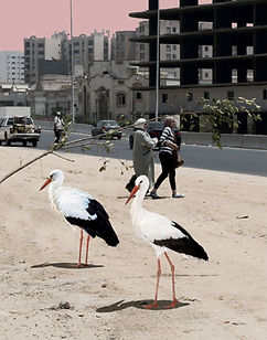 ahmad_aiyad_faburb_4.jpg