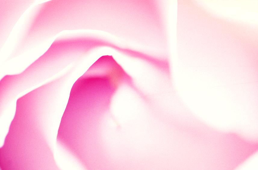 rose057.png