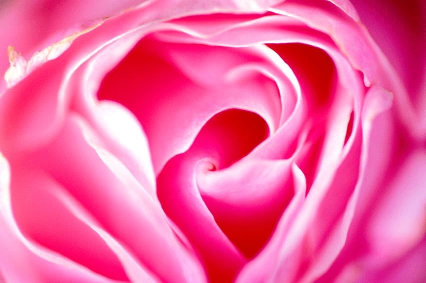 rose058.png