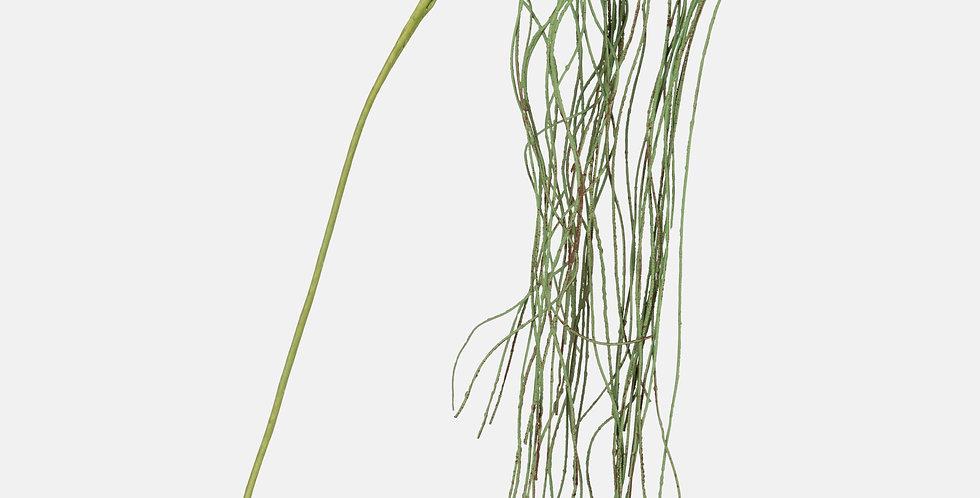 Willow Grass