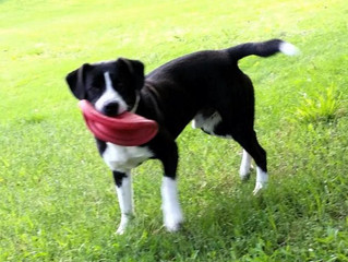 "Foster Home Needed: ""Domino"""