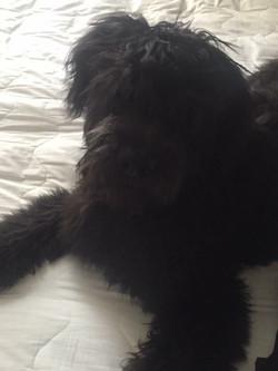 Gambler (Willow's Pup)