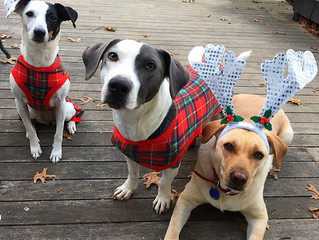 All Decked Out in Their Holiday Best!