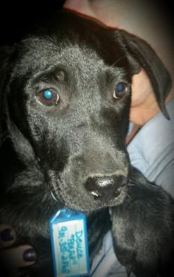 Deuce (Willow's Pup)