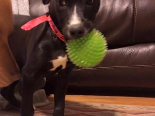 Meet Sweet Sadie