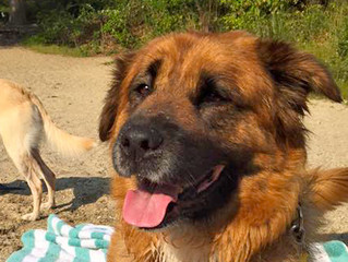 Heathcare Tips for Senior Dogs