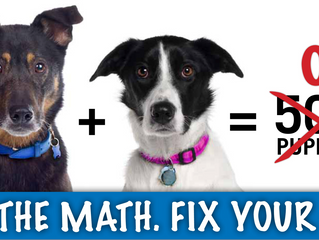 Low Cost or Free Spay Neuter Program for Dogs AND Cats!