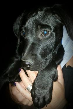 Diamond (Willow's Pup)
