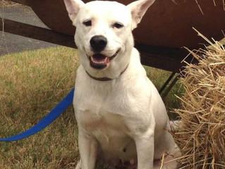 "Adoptable Dog: ""Stella"""