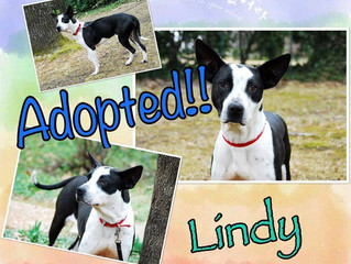 """Adopted! """"Lindy"""""""