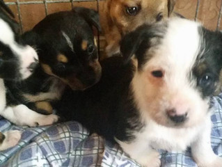 Jillian's Puppies