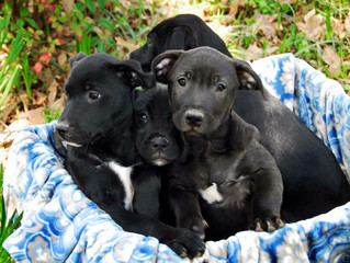 Meet the Coal-Miner Pups!
