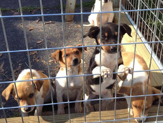Good-Hearted Woman Saves Puppies