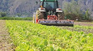 Sostegno per la trasformazione e commercializzazione dei prodotti agricoli - Piemonte