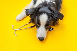 colie dog stethoscope online appointment booking