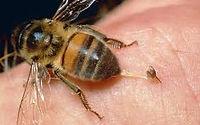 蜜蜂.jpeg