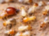 白蟻1.jpg