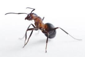 螞蟻.jpeg