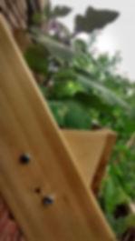 jardin vertical, jardinage urbain, vertical garden, urban garden, cèdre, cedar, jardin esthétique, aesthetic garden, herbe de blé, wheat grass, laitue, épinard, lettuce, spinach, légumes, vegetable, balcon, potager, balcony, grow, harvest, récolte