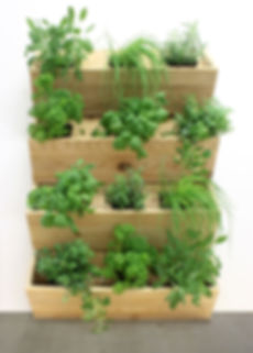 jardin vertical, jardinage urbain, vertical garden, urban garden, cèdre, cedar, jardin esthétique, aesthetic garden, laitue, épinard, lettuce, spinach, légumes, vegetable, balcon, potager, balcony, wall, mur, grow, harvest, récolte