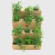 jardin vertical, jardinage urbain, vertical garden, urban garden, cèdre, cedar, jardin esthétique, aesthetic garden, laitue, épinard, lettuce, spinach, légumes, vegetable, balcon, potager, balcony, wall, mur, grow, harvest, récolte