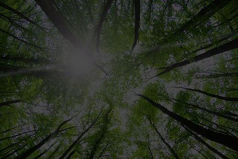 Forest%20Trees_edited.jpg