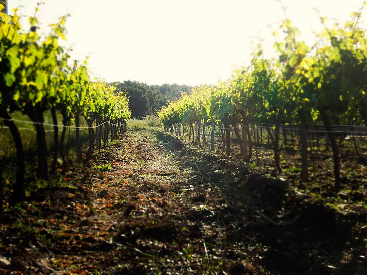 Vinya, Viña, vineyard, Massís, Massif, Macizo del Garraf, Penedès, Enoturismo, Enoturisme, Visits, Bodega, Celler