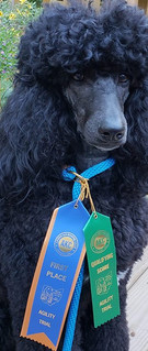 First place and a Q in agility!
