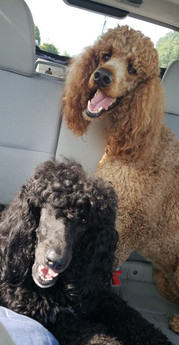 Great travel companions!