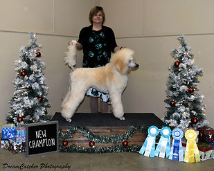 Holly Champion