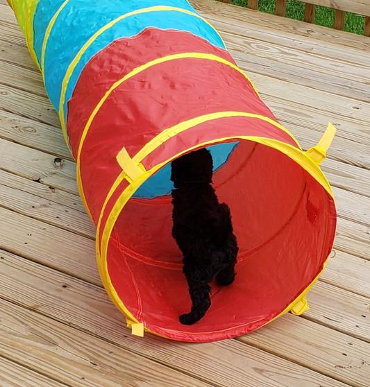 Puppy Tunnel