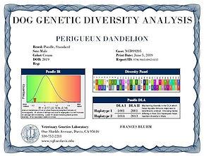 Sunny diversity certificate.jpeg