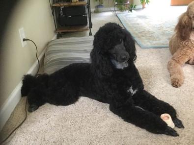 Razmataz enjoying her marrow bone.