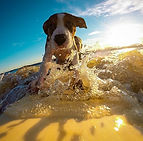 dog-2289451_640.jpg