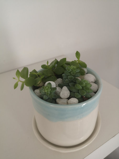 Janson's Pottery Succulent Planter with Drainage Hole