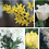 Thumbnail: Order for March 4th/ 5th Large Yellow & White Bouquets