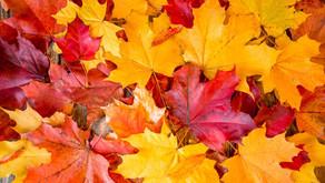 Wiener Herbstferien 26.10. - 01.11.2021