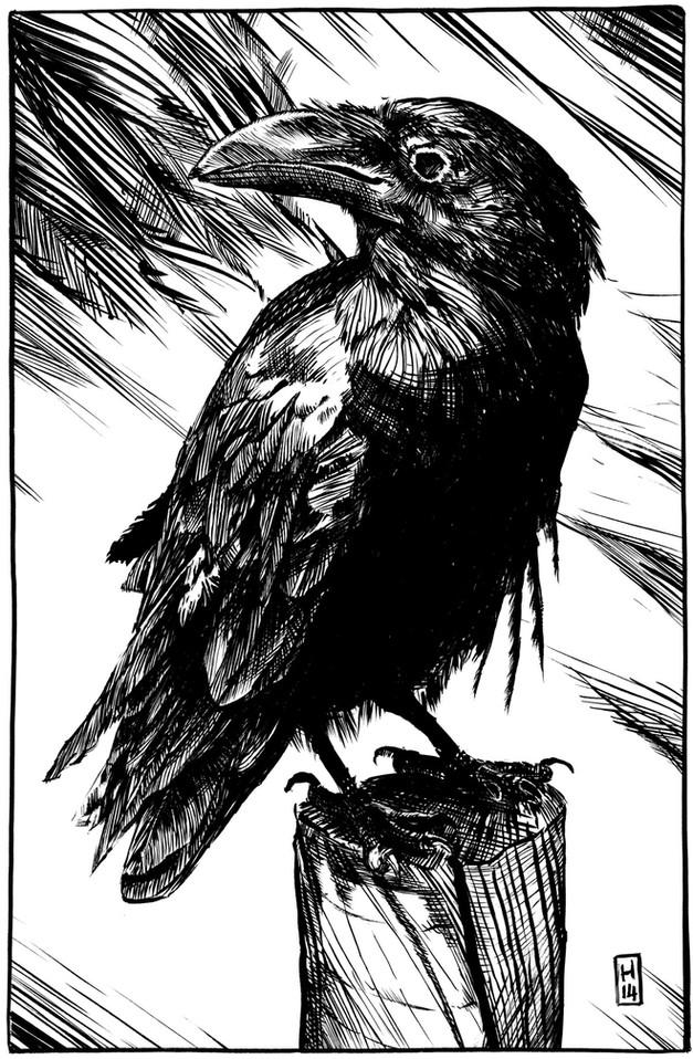 05_Raven_A_004.jpg