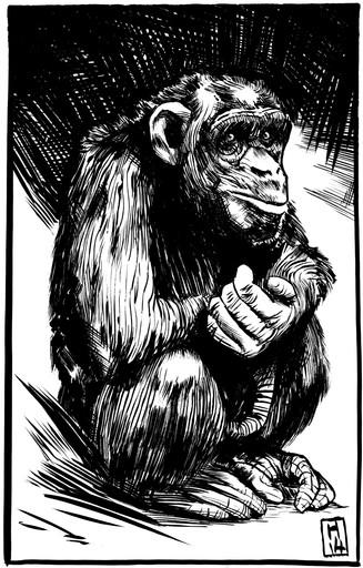 03_Chimpanzee_A_004.jpg