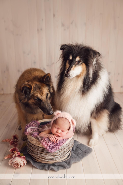 newborn con mascotas