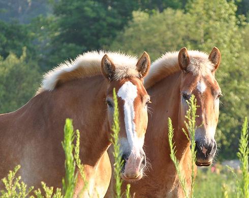 Horses_edited.jpg