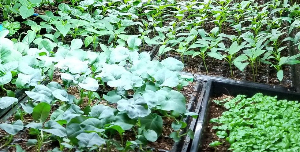 CSA - Create Your Vegetable Garden