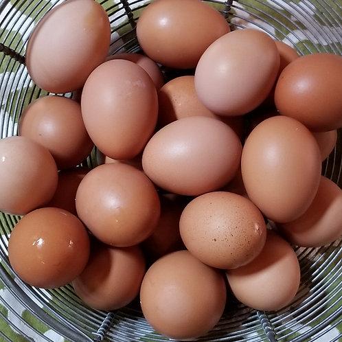 TWO Dozen Farm Eggs CSA (17 weeks)