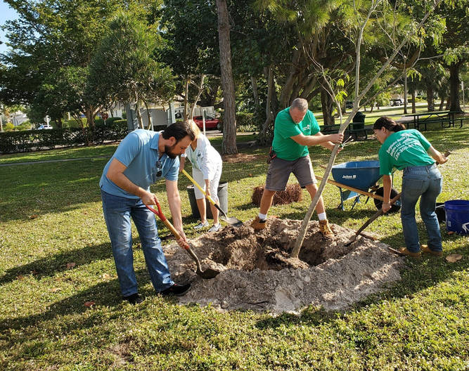 Jared helping the Calusa Garden Club plant a native Tamarind tree for Arbor Day at Leigh Plummer Park.